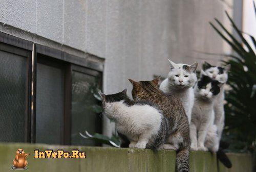 1466084277_ulichnye-koshki-tokio-15