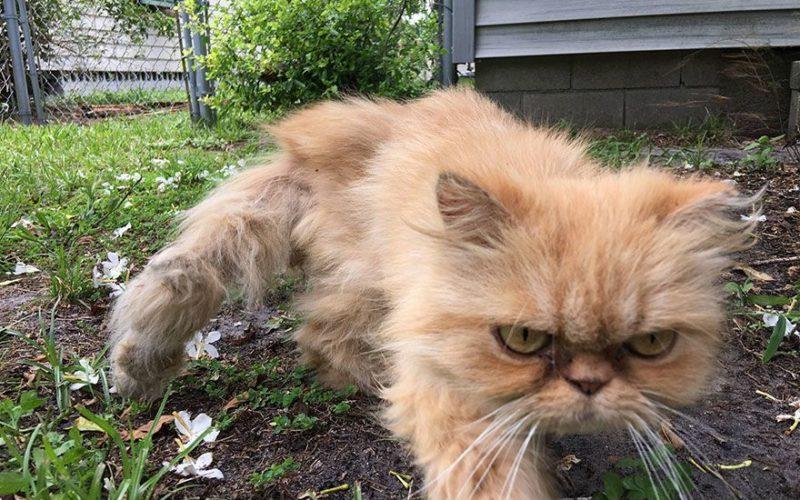 Этот Угрюмый Кот, Испепелит Вас Своей Ненавистью