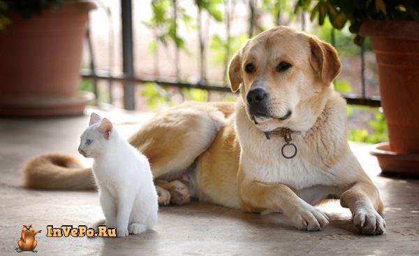Но как определиться с выбором. Кошки или Собаки?