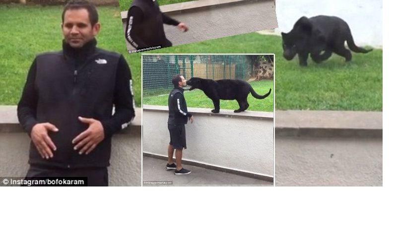 Пантера набрасывается на человека… чтобы поцеловать и обнять его