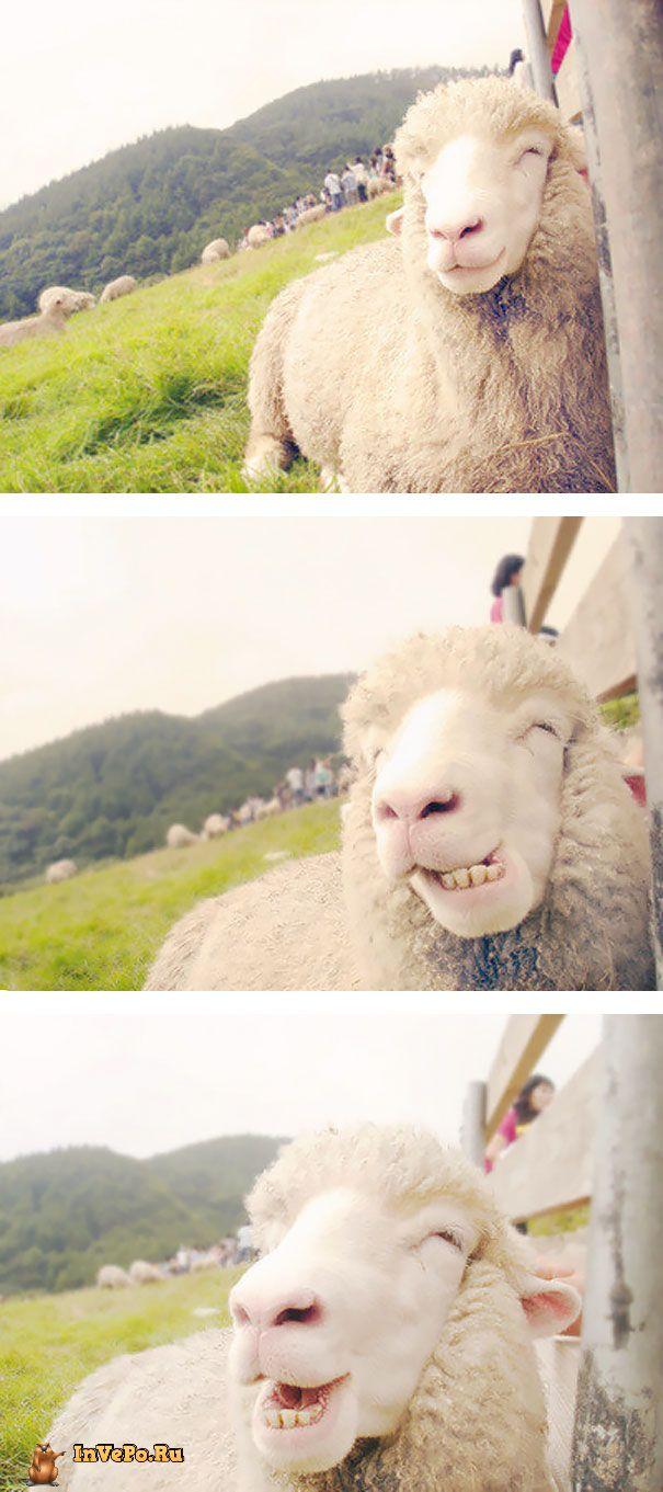 animales-con-sonrisa-15