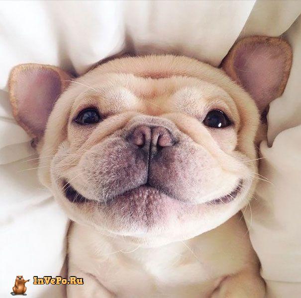 animales-con-sonrisa-18