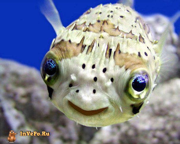animales-con-sonrisa-3