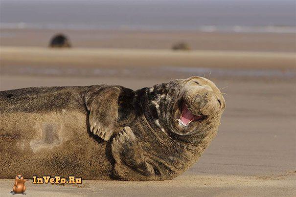 animales-con-sonrisa-7