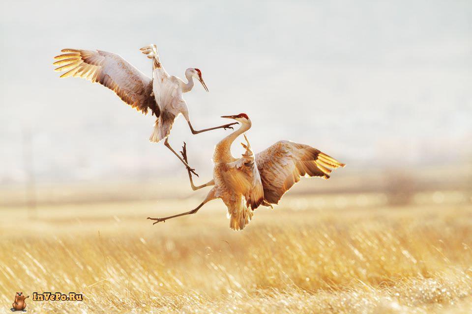 quibbll-jason-savage-sandhill-crane