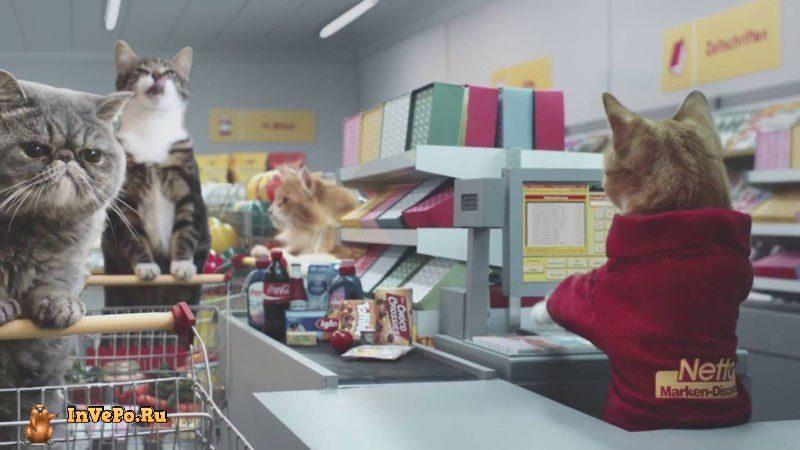 Самый Маленький в Мире Магазин Netto Создан для Кошек (Видео)
