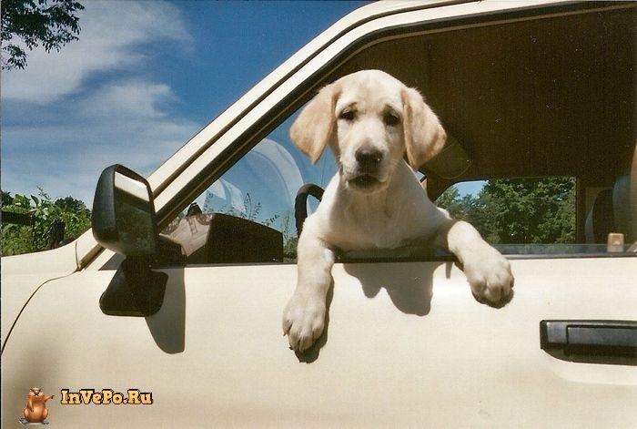 Техника безопасности: 9 вещей, которые не стоит оставлять в машине
