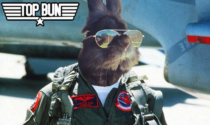 видят просто кролика, на которого надели солнцезащитные очки