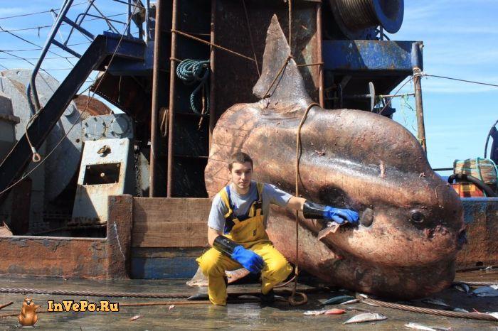 Мурманский моряк публикует фото странных глубоководных существ, попавших в сети (21 фото)