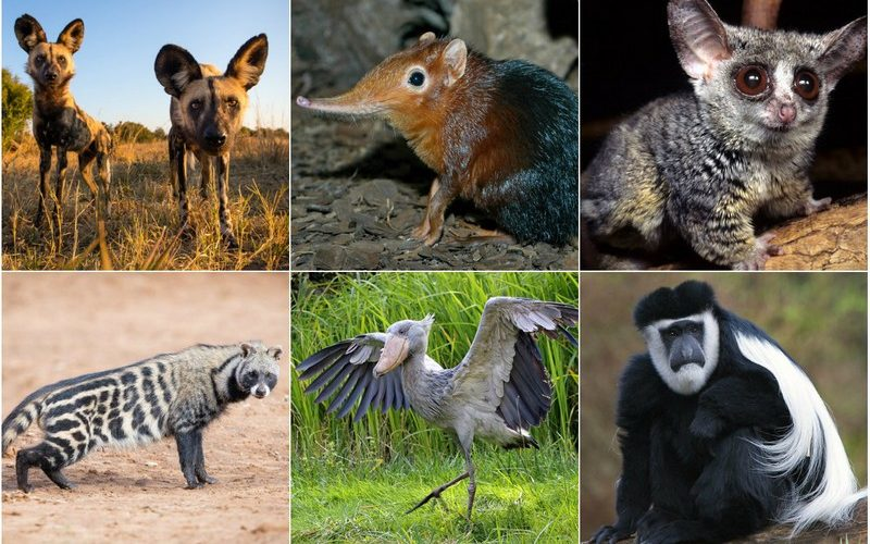 Удивительные и интересные животные Африки