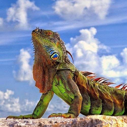 Факты про маленьких драконов нашей планеты