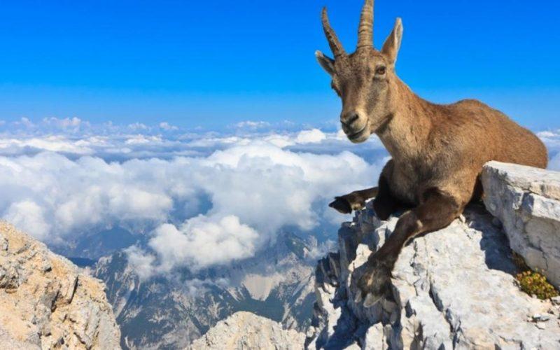 Чудеса природы: Животные с невероятными способностями