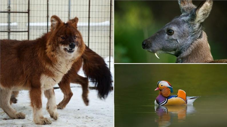 10 редких животных, которые обитают в России
