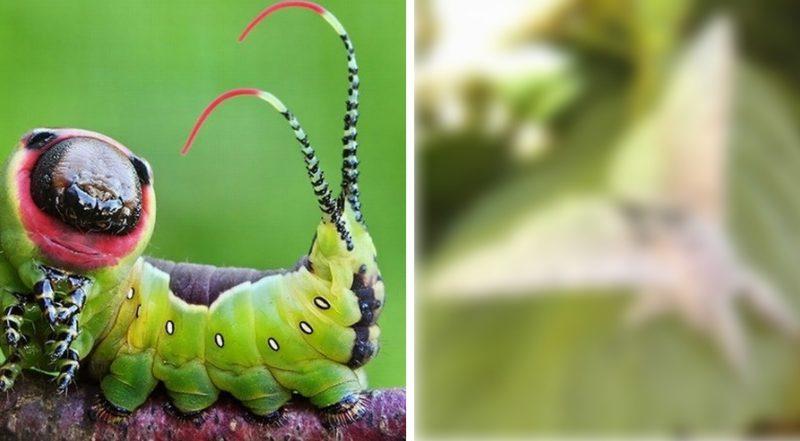 В кого превратятся эти гусеницы? Смотри их сказочные превращения!