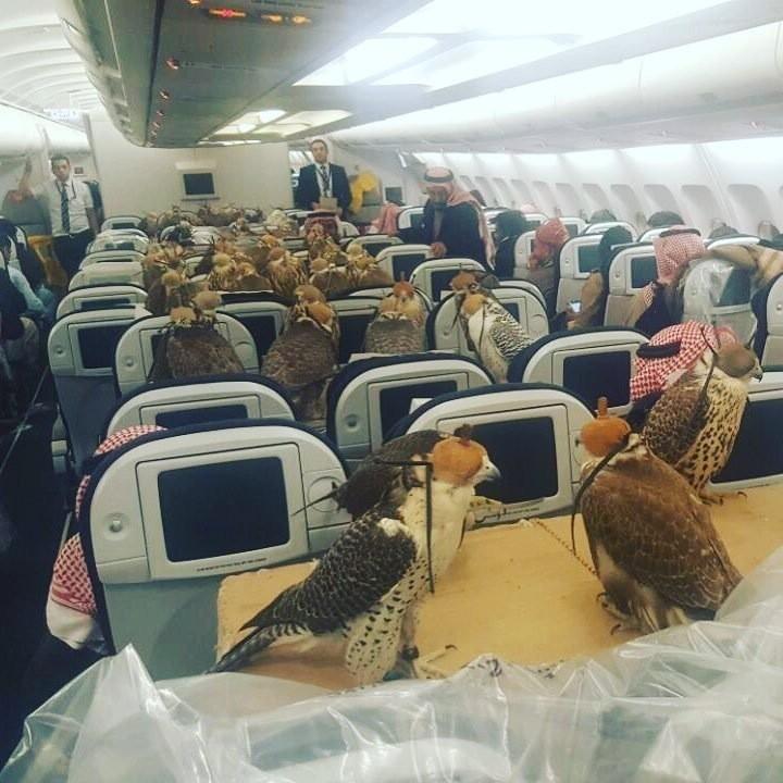 фотографией из салона самолёта, в котором летит 80 соколов