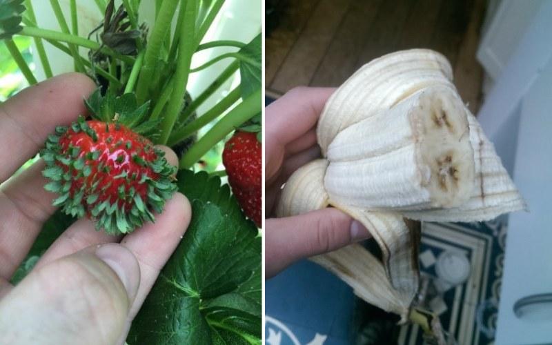 """19 Фотографии продуктов питания, которые заставят вас сказать """"Какого хрена!"""""""