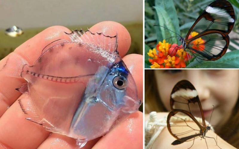 Прозрачные животные и их удивительные фото