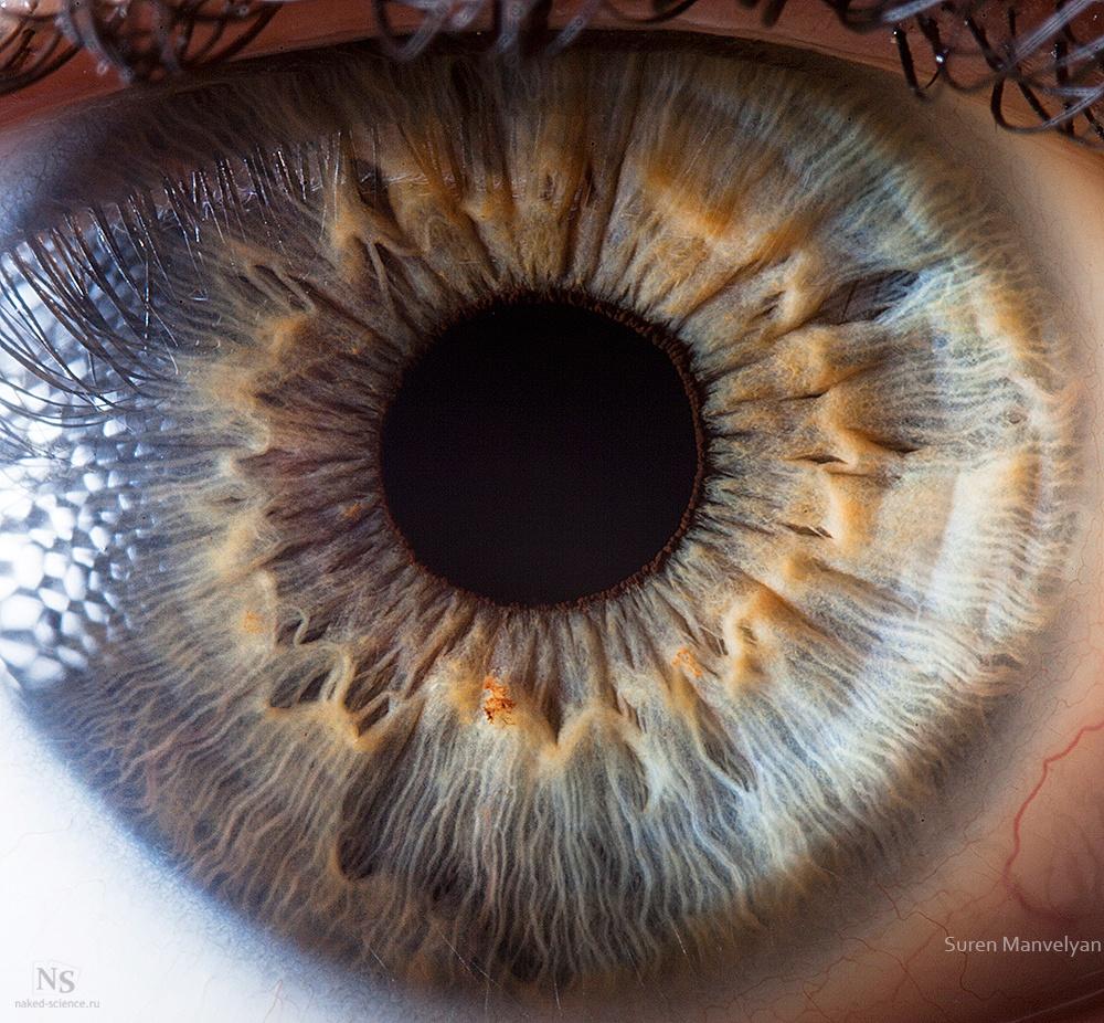 Радужная оболочка человеческого глаза вблизи.