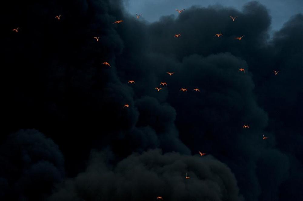 Освещенные огнем птицы на фоне дыма.