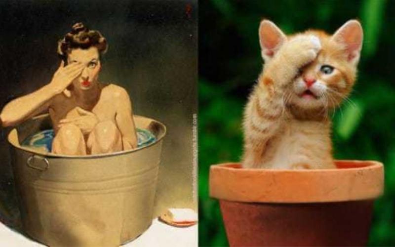 25 забавных иллюстраций Pin-Up девушек, которых пародируют кошки