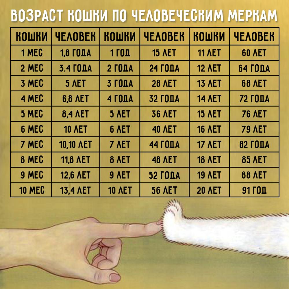 Таблица возраст кошек по человеческим меркам