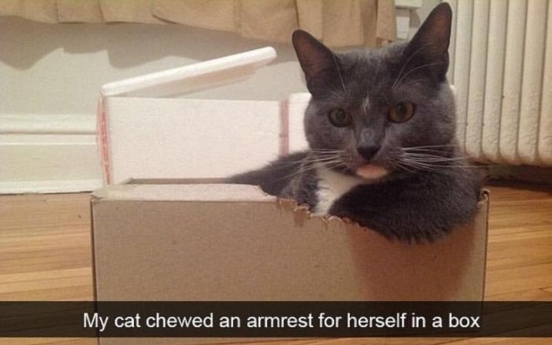 Просто «котострофа»: коты в затруднительных ситуациях (21 фото)