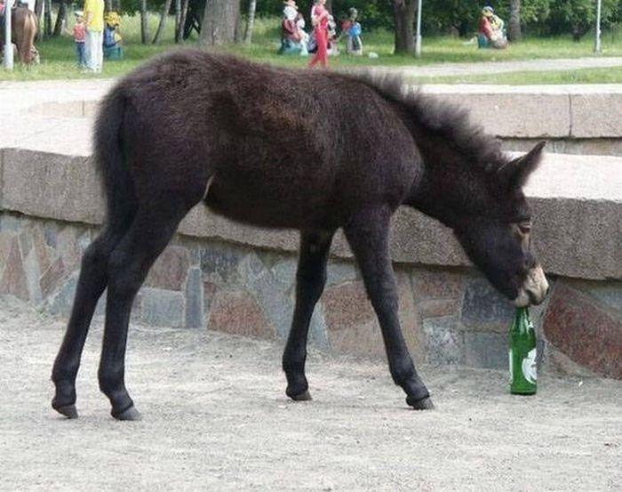 Любителям пива посвящается (48фото)