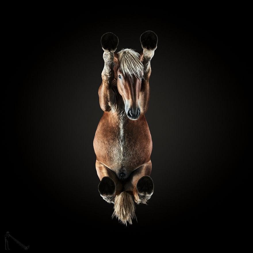 Как лошадь выглядит снизу?