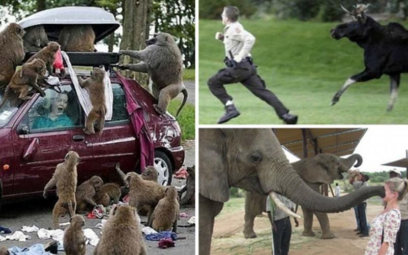 Забавные встречи любознательных животных с туристами